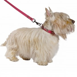 Bobby Summer Collar and Lead Set