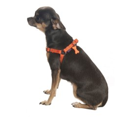 Bobby Safe Step In Harness