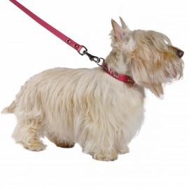 Summer Fuchsia Leather Dog Collar