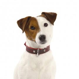 Bobby Bahia Leather Dog Collar